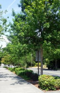 Urban Forests - King Conservation District