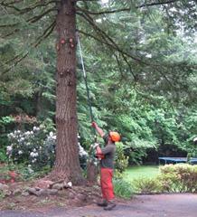 Limbing Up Trees