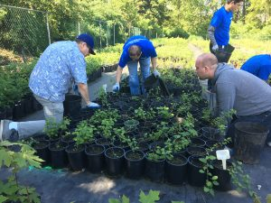 Omron Microscan Systems  volunteers at native plant nursery