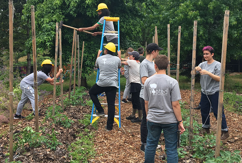 Rooted Teens String Trellis at City Soil Farm