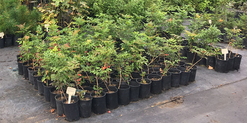 Potted native plants at KCD Native Plant Nursery