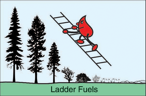 Ladder Fuels - Creating an Effective Survivable Space...A Step-by-Step Guide