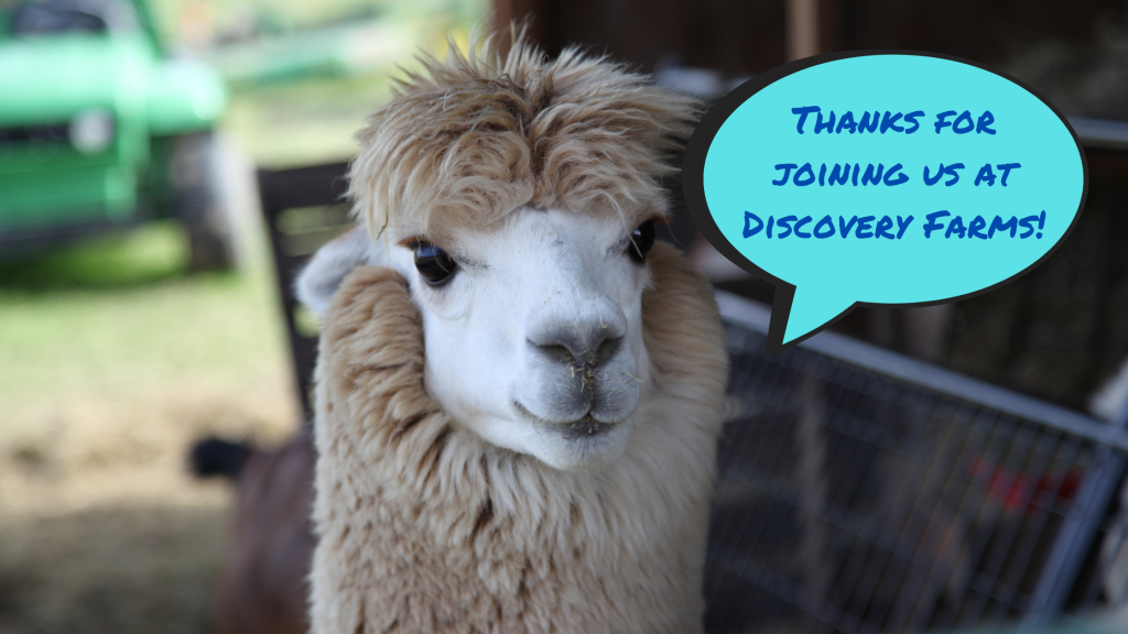 alpaca with text bubble