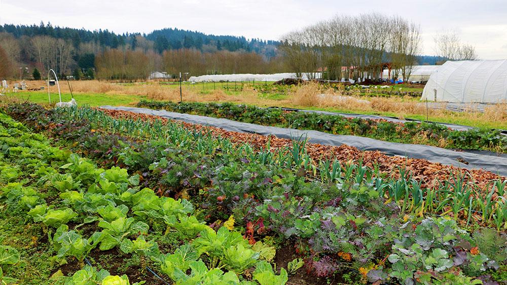 Viva Farms Vegetable Fields