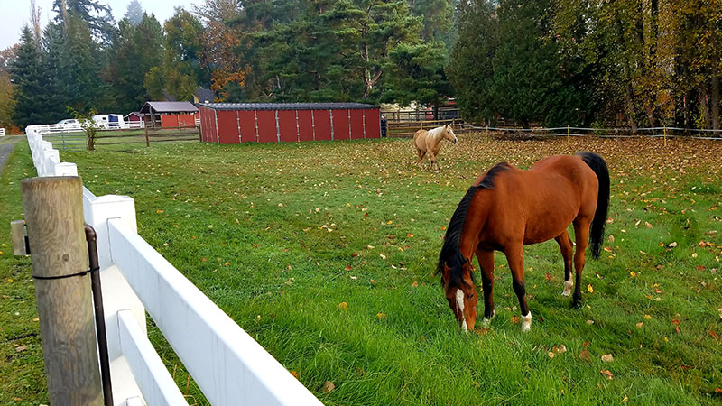 Two Horse Ranch